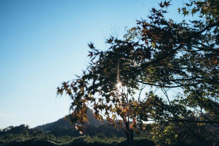 秋感のある日暮れです。